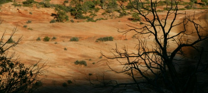 Zion National Park czyli raj na ziemi